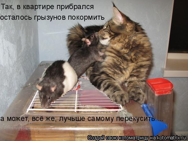 Котоматрица: Так, в квартире прибрался осталось грызунов покормить а может, всё же, лучьше самому перекусить....