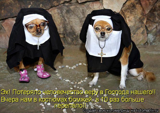 Котоматрица: Эх! Потеряло человечество веру в Господа нашего!! Вчера нам в костюмах бомжей, в 10 раз больше перепало!!