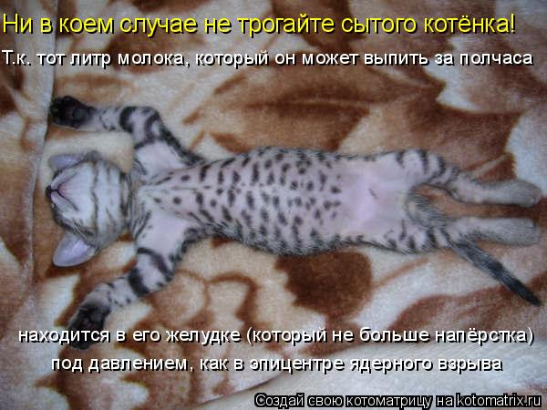 Котоматрица: Ни в коем случае не трогайте сытого котёнка! находится в его желудке (который не больше напёрстка) под давлением, как в эпицентре ядерного в