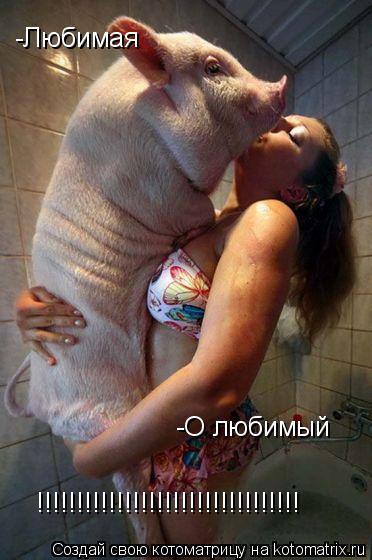 Котоматрица: -Любимая -О любимый !!!!!!!!!!!!!!!!!!!!!!!!!!!!!!!!!