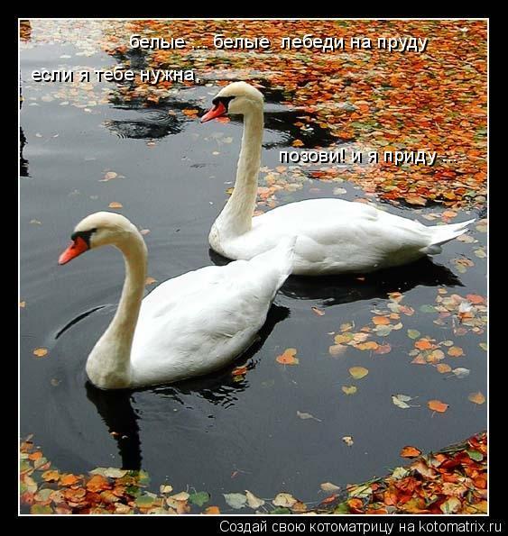 Котоматрица: белые ... белые  лебеди на пруду если я тебе нужна, позови! и я приду ...