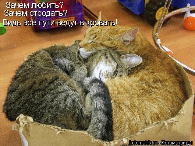 Котоматрица: Зачем любить? Зачем стродать? Видь все пути ведут в кровать!