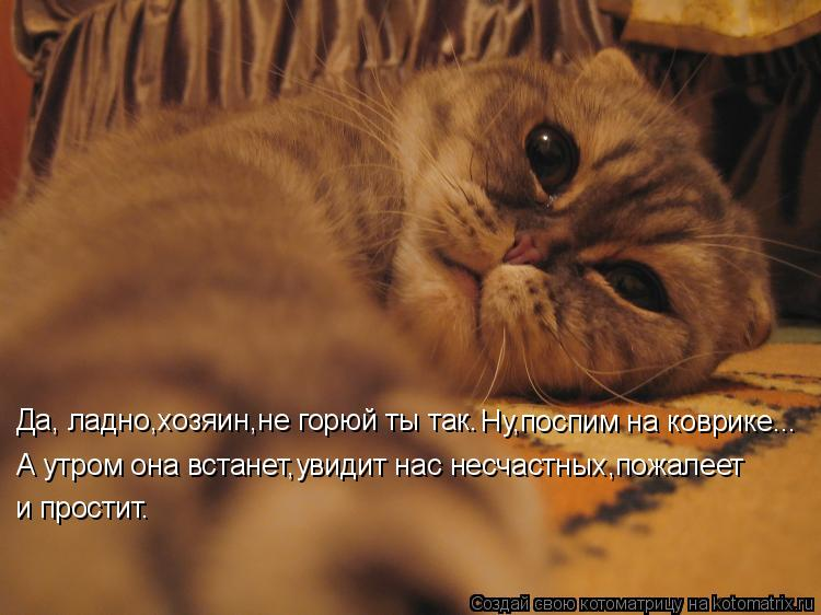Котоматрица: Да, ладно,хозяин,не горюй ты так. Ну,поспим на коврике... А утром она встанет,увидит нас несчастных,пожалеет и простит.