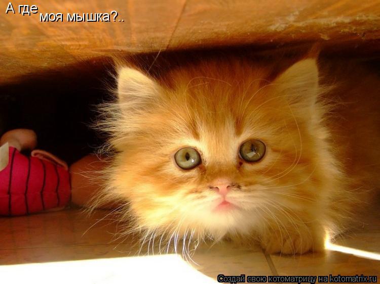 Котоматрица: А где  моя мышка?..