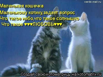 Котоматрица: Маленькая кошечка Что такое ♥♥♥ЛЮБОВЬ♥♥♥ Что такое небо,что такое солнышко Маленькому котику,задает вопрос