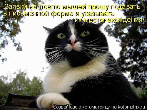 Котоматрица: -Заявки на ловлю мышей прошу подавать  в письменной форме и указывать  их местонахождения!