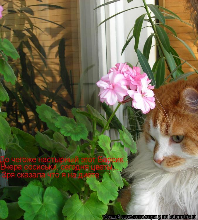 Котоматрица: До чегоже настырный этот Барсик... Вчера сосиськи, сегодня цветы... Зря сказала что я на диете