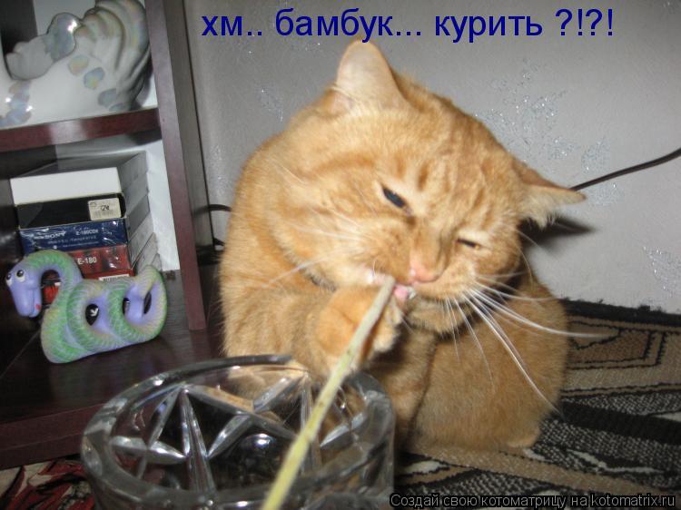 Котоматрица: хм.. бамбук... курить ?!?!