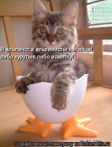 Котоматрица: Я альпинст,а альпинисты как яйца! либо курутые,либо всмятку!