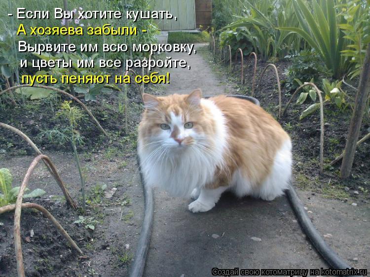 Котоматрица: - Если Вы хотите кушать, А хозяева забыли -  Вырвите им всю морковку, и цветы им все разройте, пусть пеняют на себя!