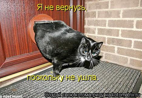 Котоматрица: Я не вернусь,  поскольку не ушла.