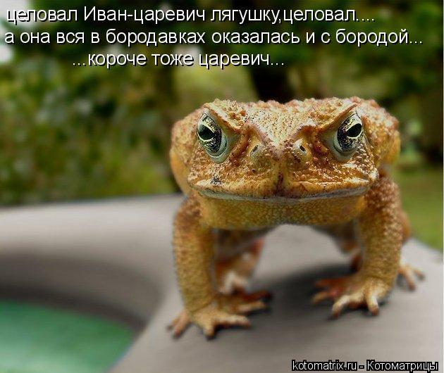 Котоматрица: целовал Иван-царевич лягушку,целовал.... а она вся в бородавках оказалась и с бородой... ...короче тоже царевич...