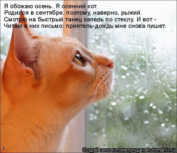 Котоматрица: Я обожаю осень. Я осенний кот.  Родился в сентябре, поэтому, наверно, рыжий. Смотрю на быстрый танец капель по стеклу. И вот - Читаю в них письм
