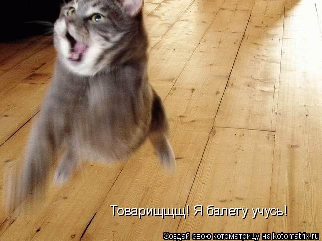 Котоматрица: Товарищщщ! Я балету учусь!