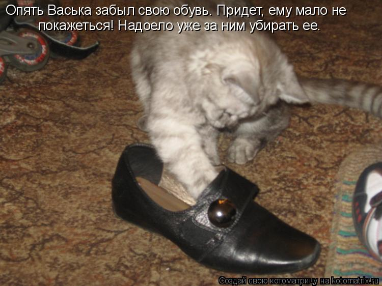 Котоматрица: Опять Васька забыл свою обувь. Придет, ему мало не покажеться! Надоело уже за ним убирать ее.