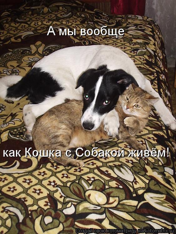 Котоматрица: А мы вообще  как Кошка с Собакой живём!