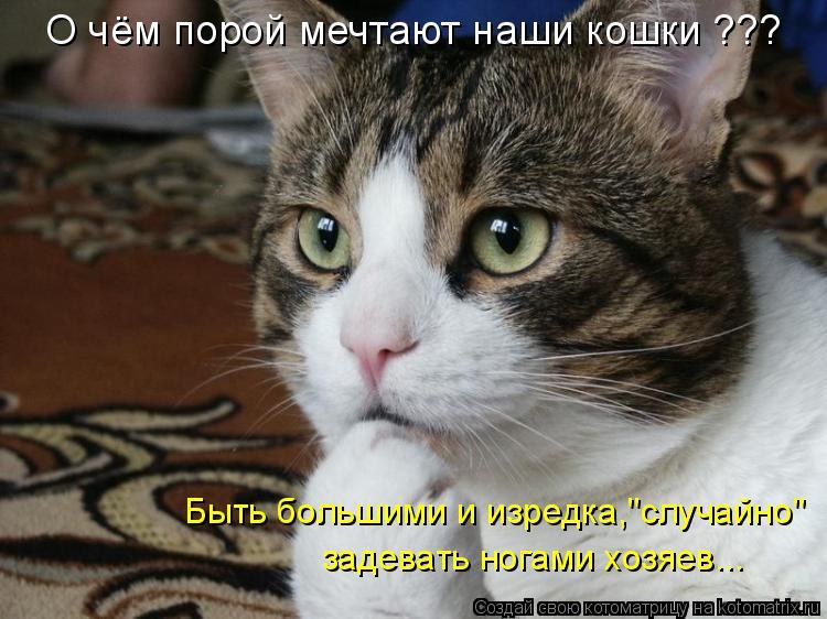"""Котоматрица: О чём порой мечтают наши кошки ??? Быть большими и изредка,""""случайно"""" задевать ногами хозяев..."""