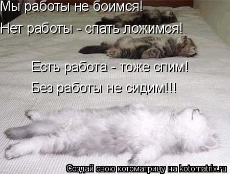 Котоматрица: Мы работы не боимся! Нет работы - спать ложимся! Есть работа - тоже спим! Без работы не сидим!!!