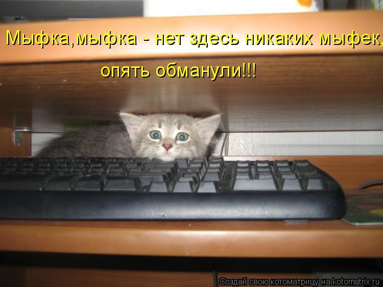 Котоматрица: Мыфка,мыфка - нет здесь никаких мыфек, опять обманули!!!