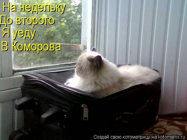 Котоматрица: На недельку До второго Я уеду В Коморова