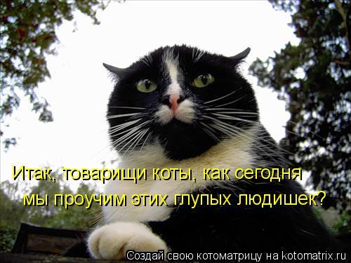 Котоматрица: Итак, товарищи коты, как сегодня мы проучим этих глупых людишек?