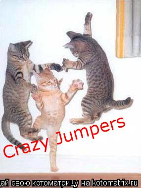 Котоматрица: Crazy Jumpers Crazy Jumpers