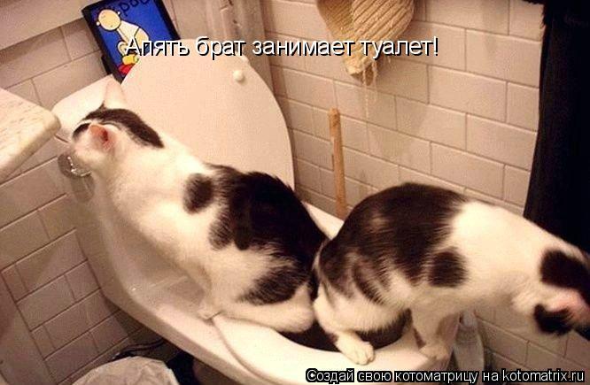 Котоматрица: Апять брат занимает туалет!