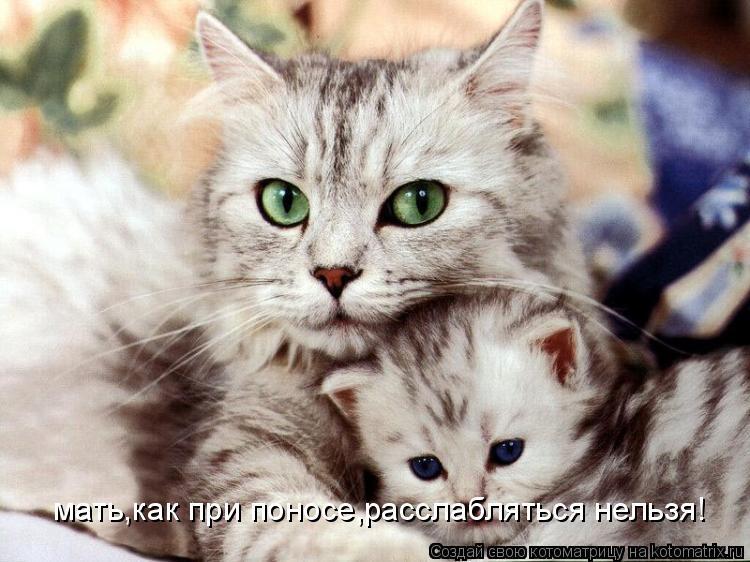 Котоматрица: мать,как при поносе,расслабляться нельзя!
