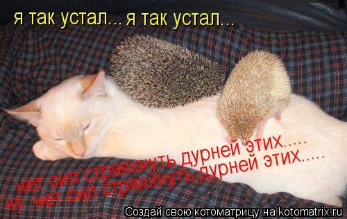 Котоматрица: я так устал... я так устал... нет сил стряяхнуть дурней этих..... нет сил стряяхнуть дурней этих..... ну