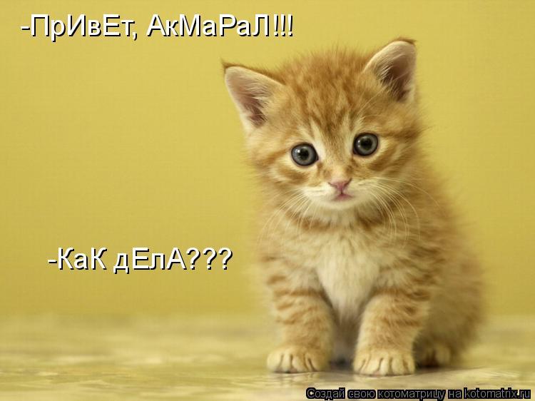 Котоматрица: -ПрИвЕт, АкМаРаЛ!!! -КаК дЕлА???