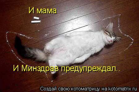 Котоматрица: И мама И Минздрав предупреждал..