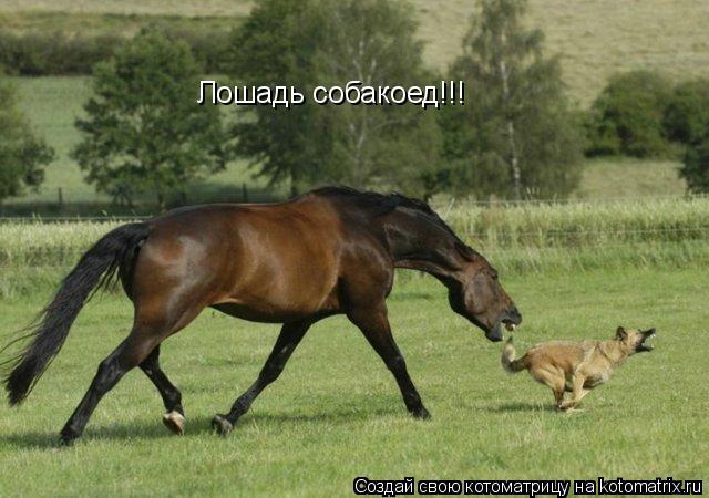 Котоматрица: Лошадь собакоед!!!