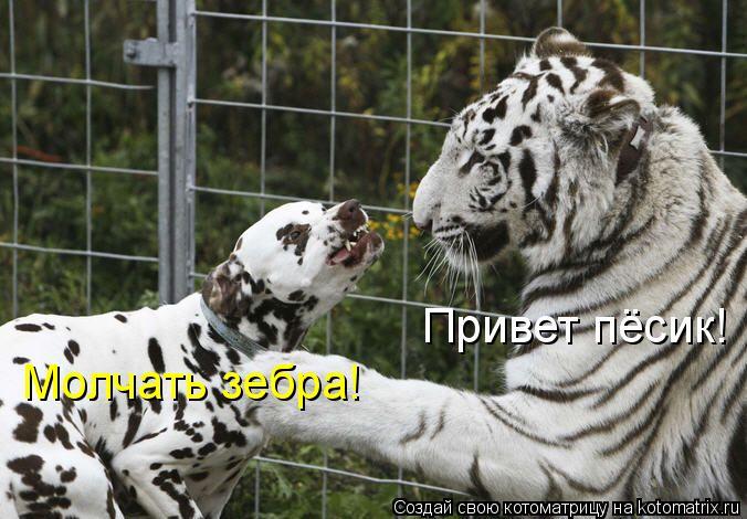 Котоматрица: Привет пёсик! Молчать зебра!