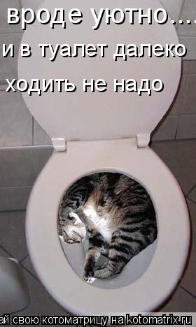 Котоматрица: вроде уютно...... и в туалет далеко  ходить не надо