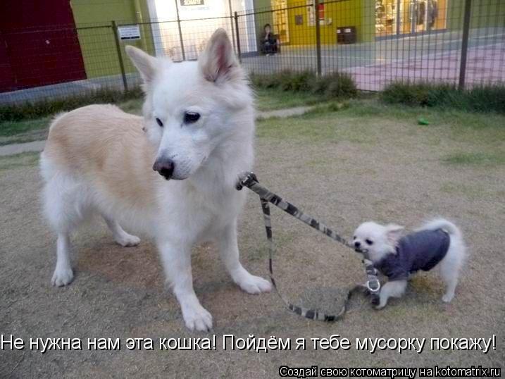 Котоматрица: Не нужна нам эта кошка! Пойдём я тебе мусорку покажу!