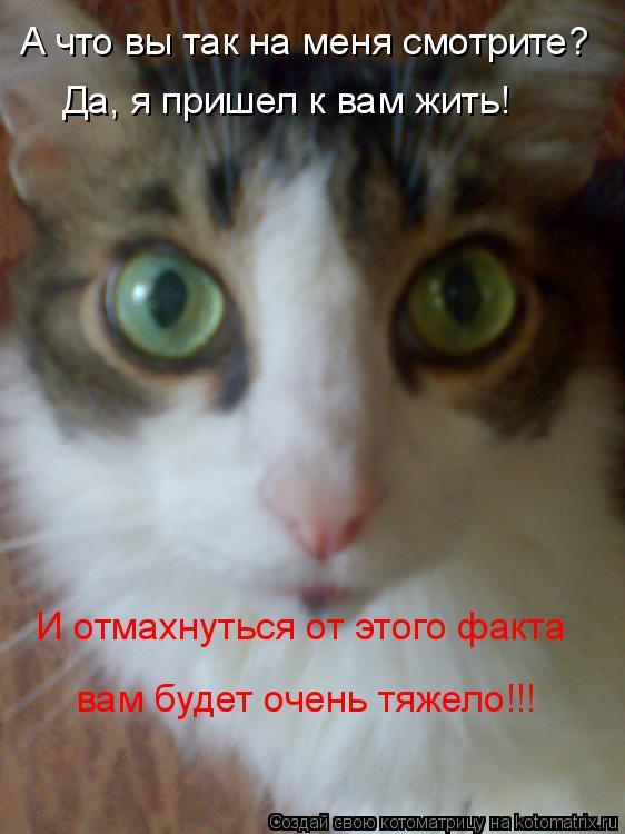Котоматрица: А что вы так на меня смотрите? Да, я пришел к вам жить! И отмахнуться от этого факта вам будет очень тяжело!!!