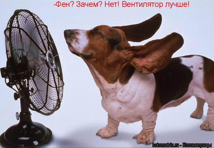 Котоматрица: -Фен? Зачем? Нет! Вентилятор лучше!