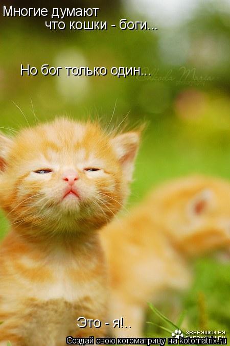 Котоматрица: Многие думают что кошки - боги... Но бог только один... Это - я!..