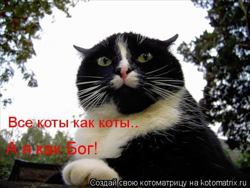 Котоматрица: Все коты как коты.. А я как Бог!