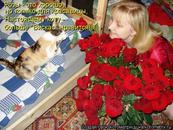 """Котоматрица: Розы - это хорошо,  но только для красавицы, Настоящему коту - больше """"Вискас"""" нравится!!!"""