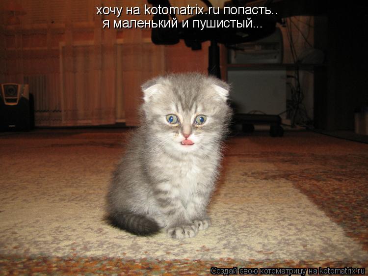 Котоматрица: хочу на kotomatrix.ru попасть.. я маленький и пушистый...