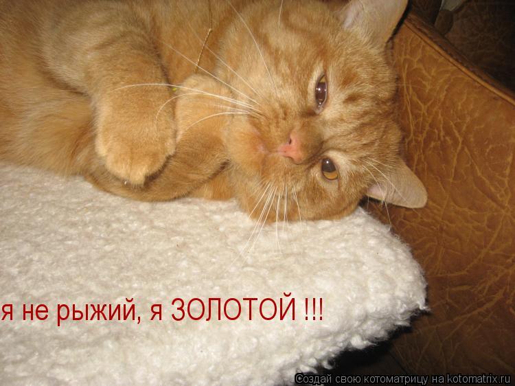 Котоматрица: я не рыжий, я ЗОЛОТОЙ !!!