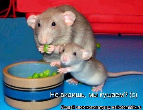 Котоматрица: Не видишь, мы кушаем? (с) Не видишь, мы кушаем? (с)