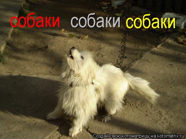 Котоматрица: собаки собаки собаки