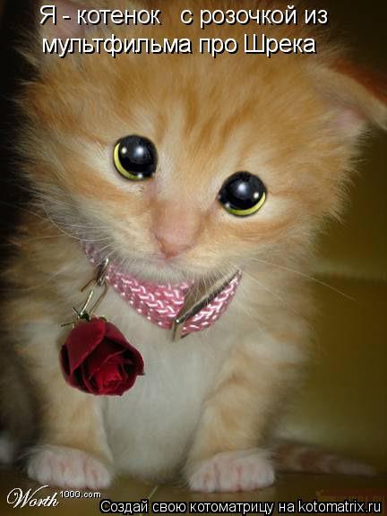 Котоматрица: Я - котенок   с розочкой из  мультфильма про Шрека мультфильма про Шрека