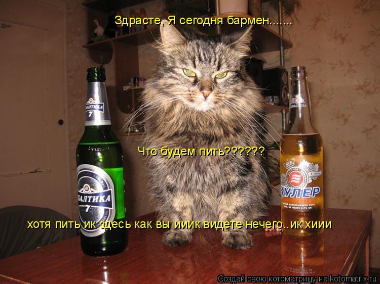 Котоматрица: Здрасте, Я сегодня бармен....... Что будем пить?????? хотя пить ик здесь как вы ииик видете нечего..ик хиии