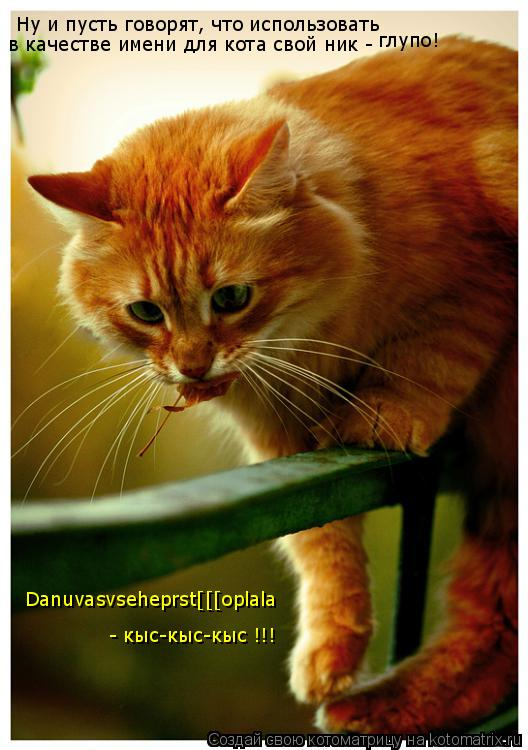 Котоматрица: Ну и пусть говорят, что использовать в качестве имени для кота свой ник - глупо! Danuvasvseheprst[[[oplala - кыс-кыс-кыс !!!