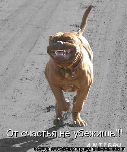 Котоматрица: От счастья не убежишь!!!