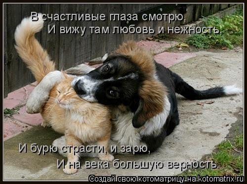 Котоматрица: В счастливые глаза смотрю,  И вижу там любовь и нежность,  И бурю страсти, и зарю,  И на века большую верность.
