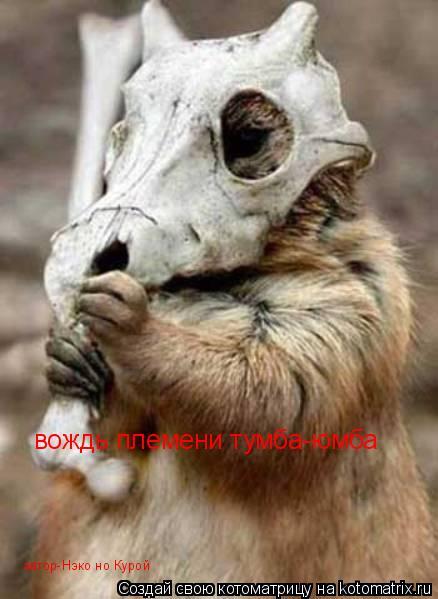 Котоматрица: вождь племени тумба-юмба автор-Нэко но Курой